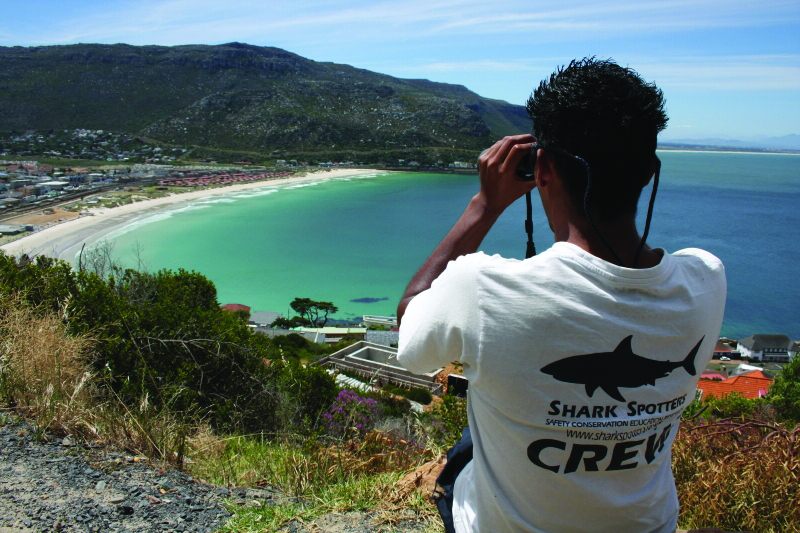 bc355d4b827a New automated shark detection project launched